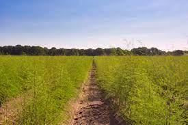En quoi consiste le phénomène de zéro résidus de pesticides
